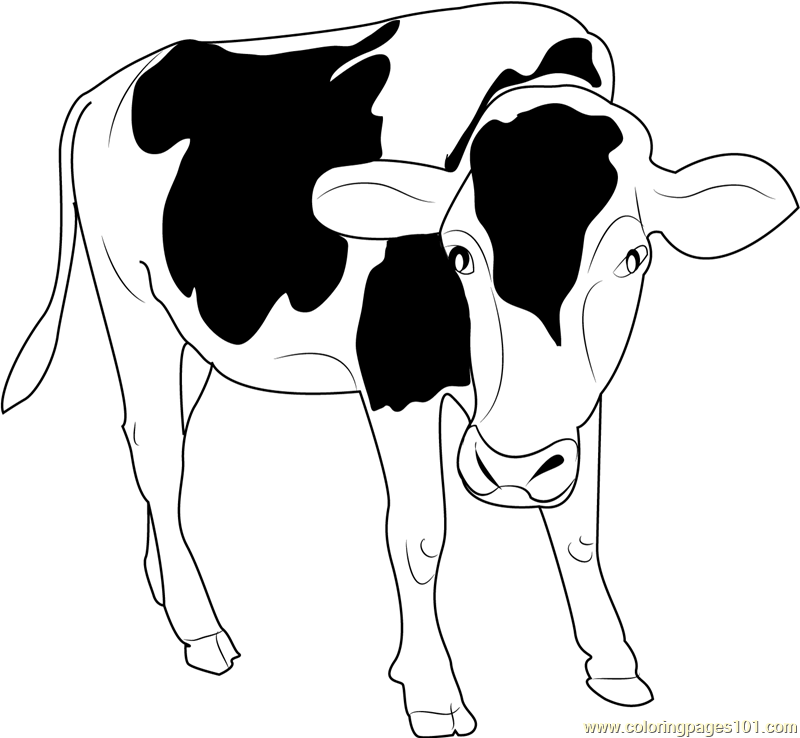 Drawing White Nose Transparent Image Clipart Free Download