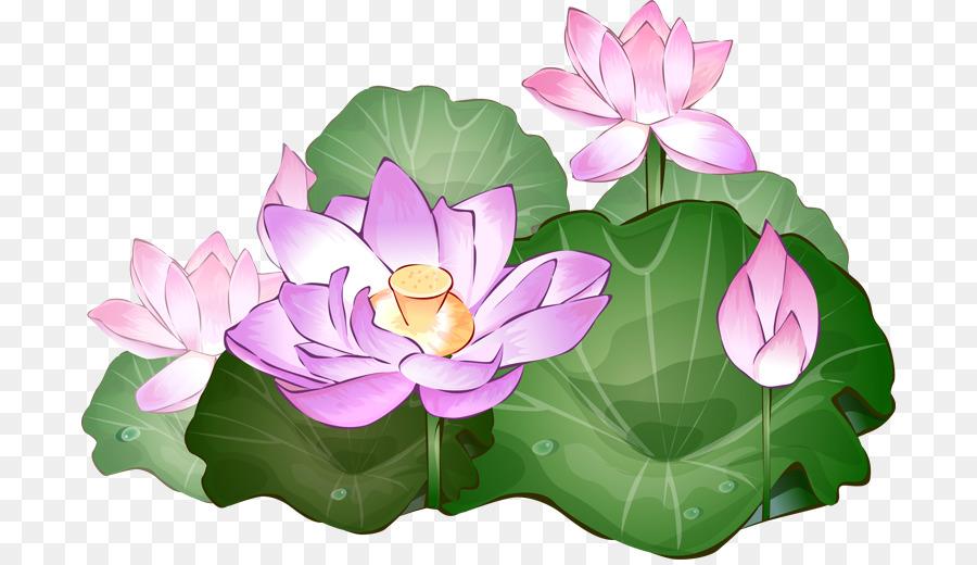 Flower Plant Lotus Transparent Png Image Clipart Free Download