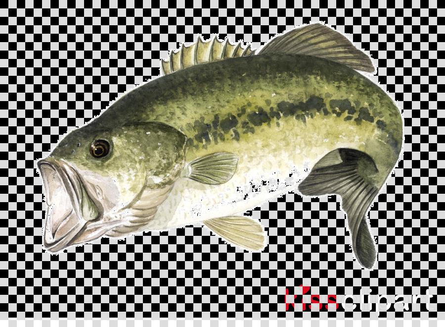Largemouth bass clipart Largemouth bass Fishing Perch
