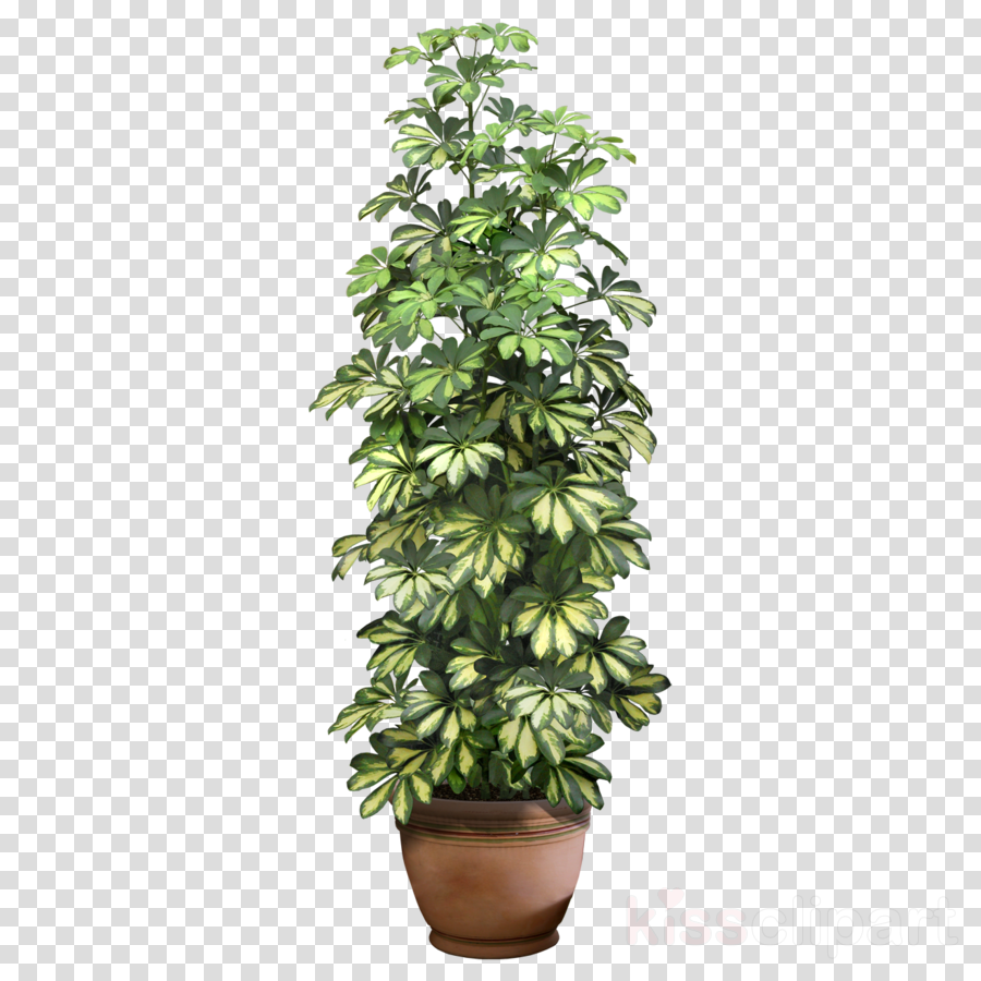 plant png clipart Houseplant Plants