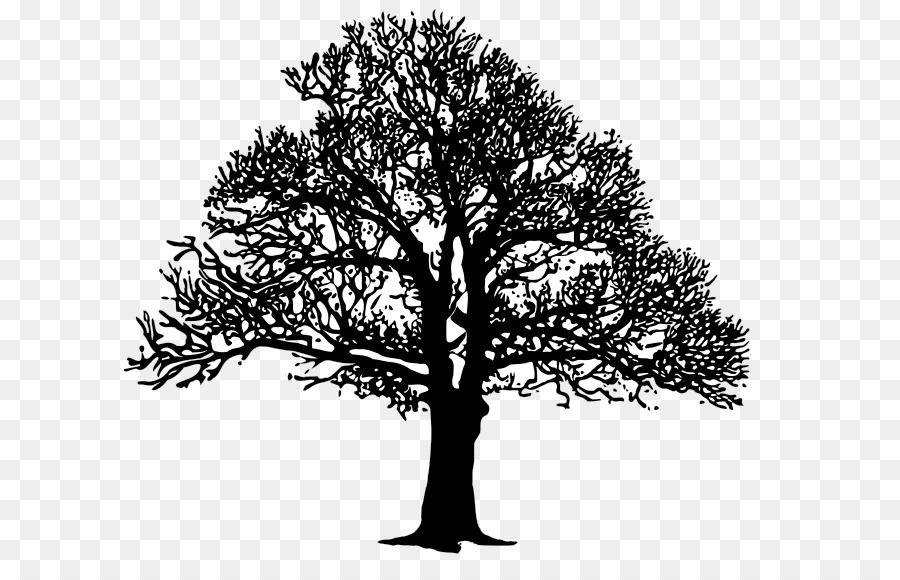Tree Silhouette Drawing Transparent Png Image Clipart Free Download