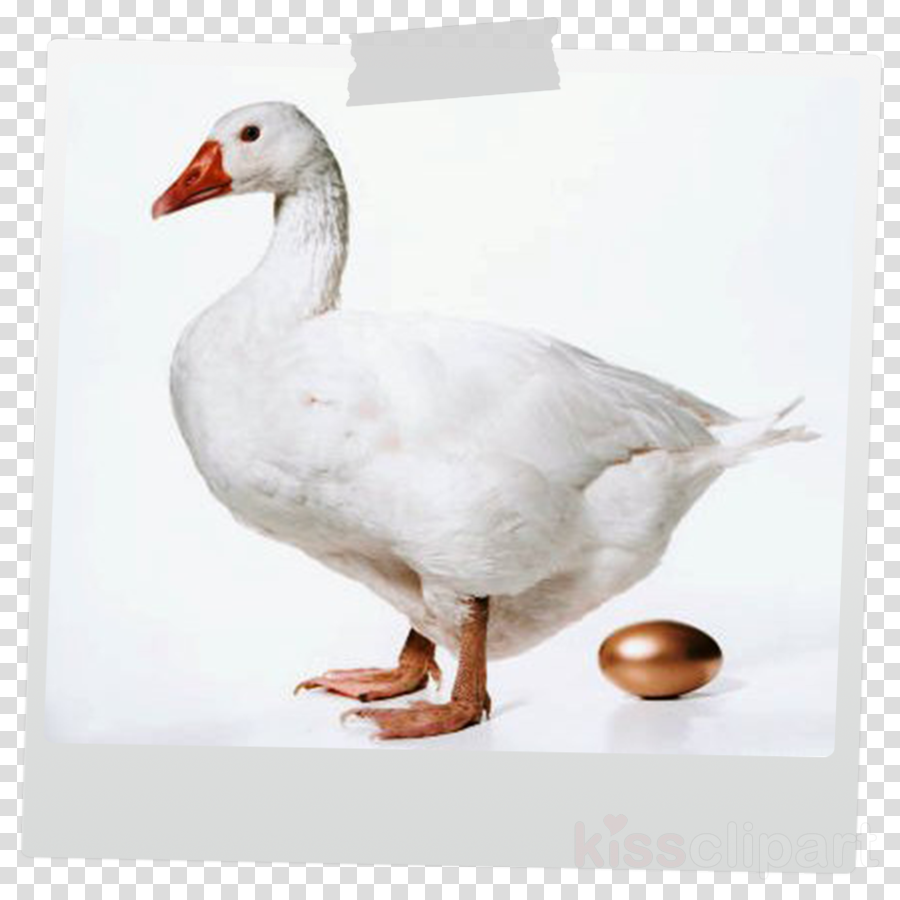 Goose clipart Duck Domestic goose