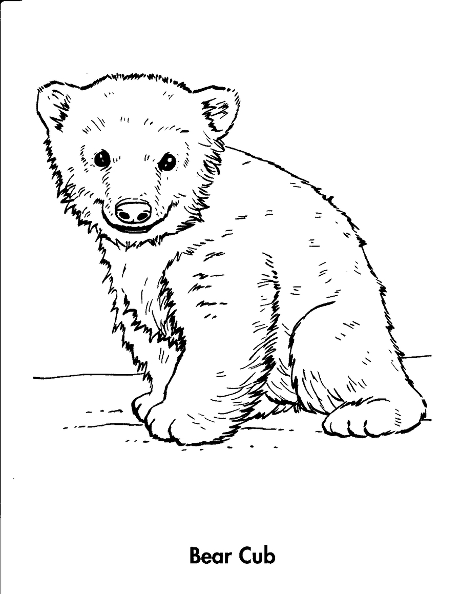 Download Polar Bear Cub Coloring Pages Clipart Polar Bear Coloring - Polar-bear-coloring-pages