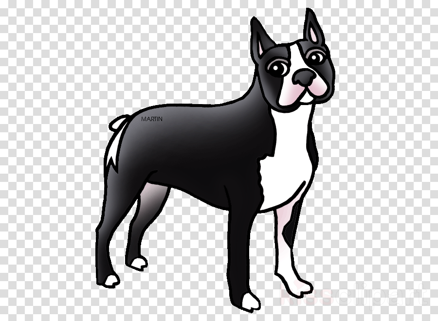 massachusetts state dog drawings clipart Boston Terrier Massachusetts Scottish Terrier