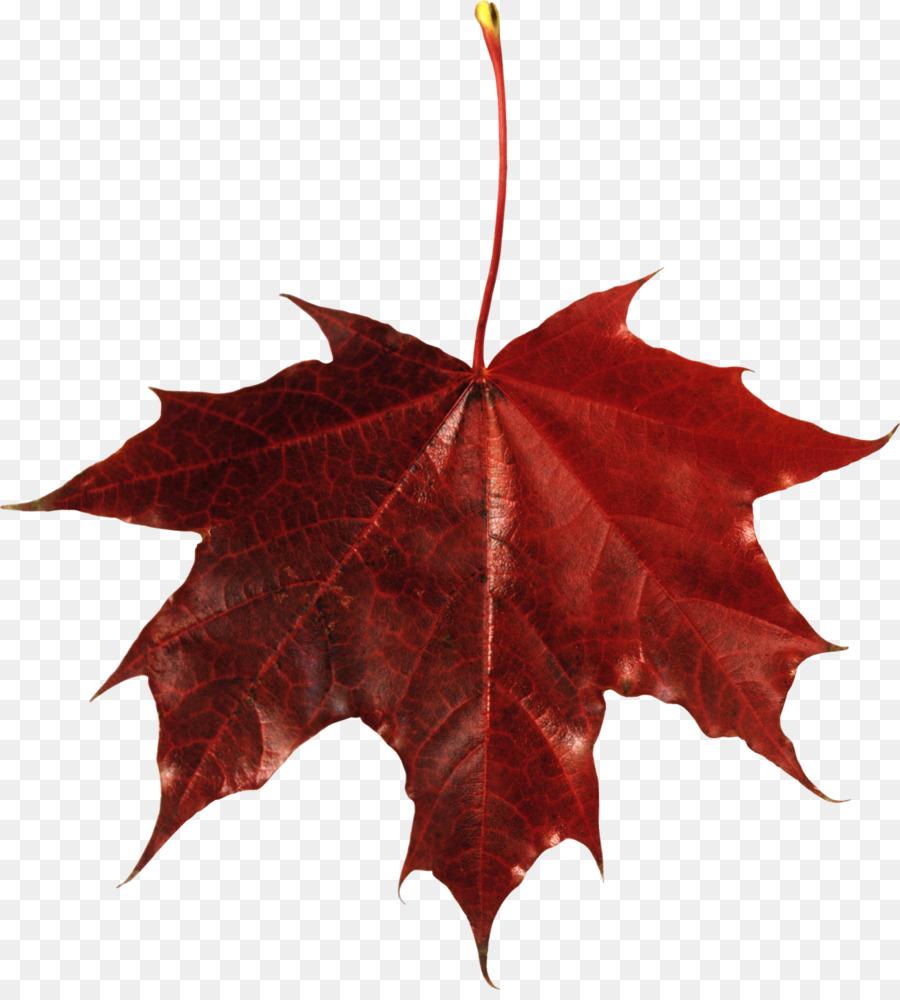 Canada Maple Leaf Clipart Maple Leaf Plant Transparent