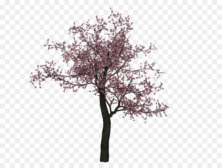 cherry blossom tree png clipart Cherry blossom