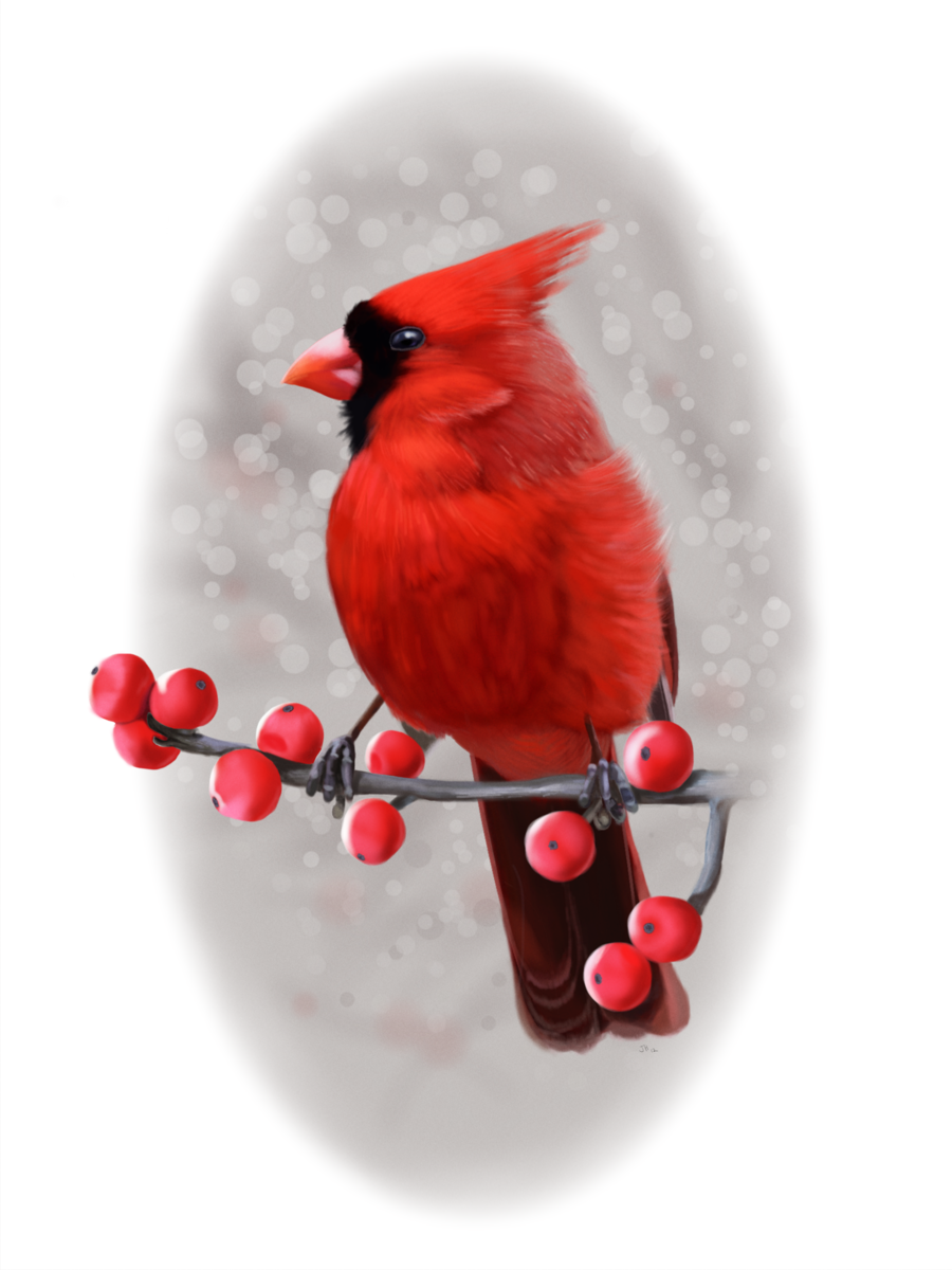 Christmas Cardinals Clipart.Red Christmas Ornament Clipart Painting Drawing Bird