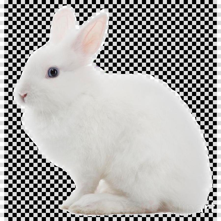 rabbit clipart Domestic rabbit Flemish Giant rabbit