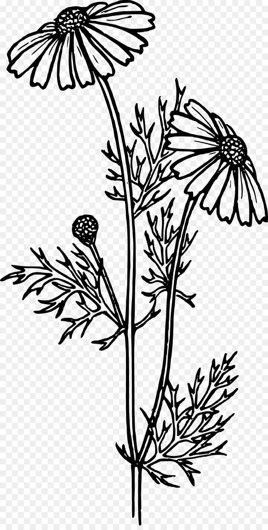 Flower black and white realistic. Butterfly whitetransparent png image
