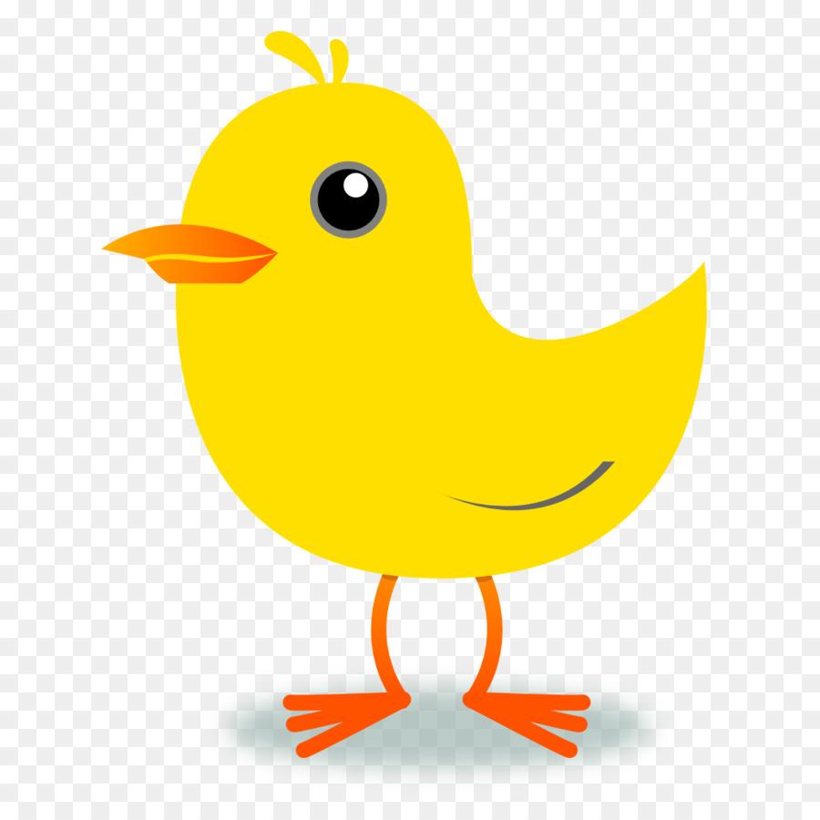 Bird yellow. Chicken cartoon clipart duck