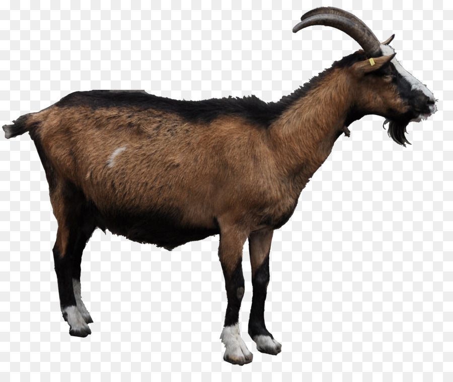 goat png clipart Goat Sheep