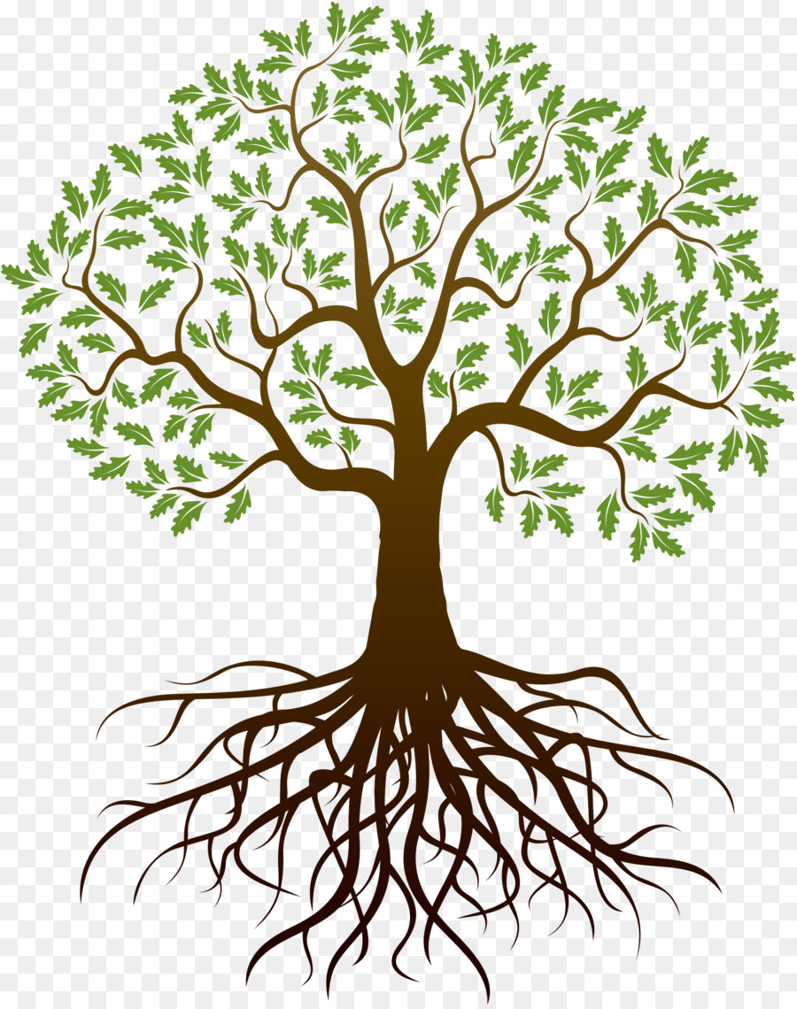 Drawing Oak Tree Transparent Png Image Clipart Free Download