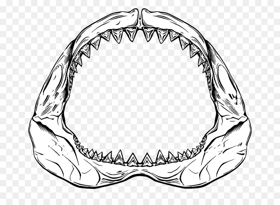 Shark jaws. Great white background clipart