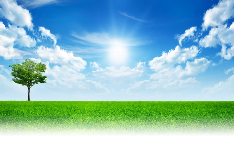 Family tree background clipart nature landscape sky - Family tree desktop wallpaper ...