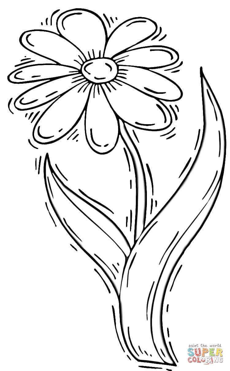 Download Daisy Flower Drawing Clipart Common Daisy Drawing Flower