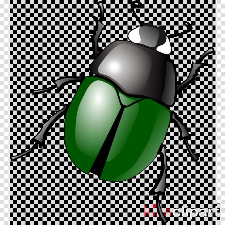 beetle clipart Japanese rhinoceros beetle Clip art