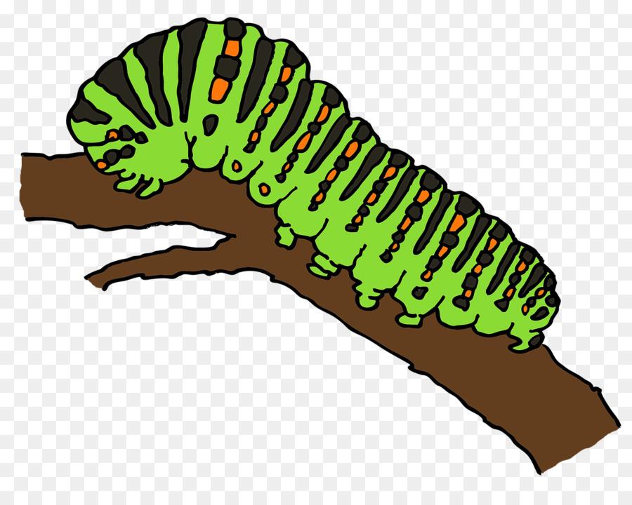 Caterpillar Cartoon Clipart Caterpillar Drawing Butterfly