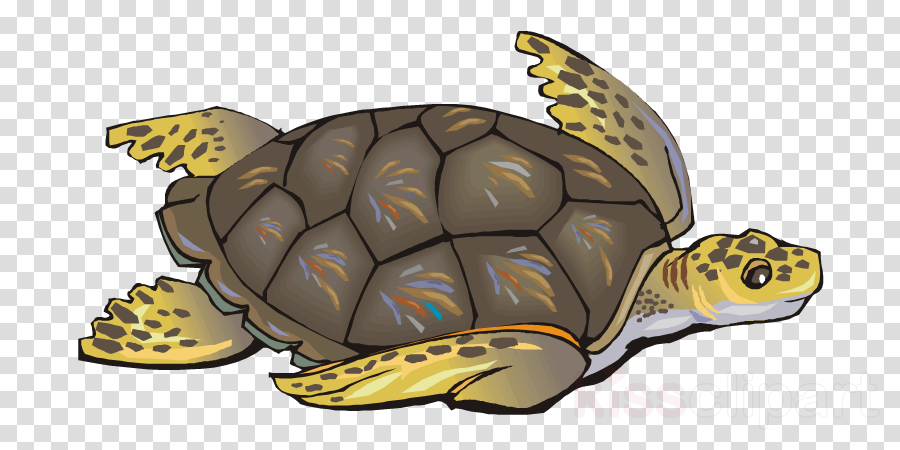 wild life protection poster clipart Sea turtle Poster