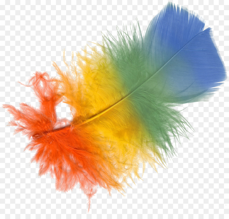 Feather clipart Feather