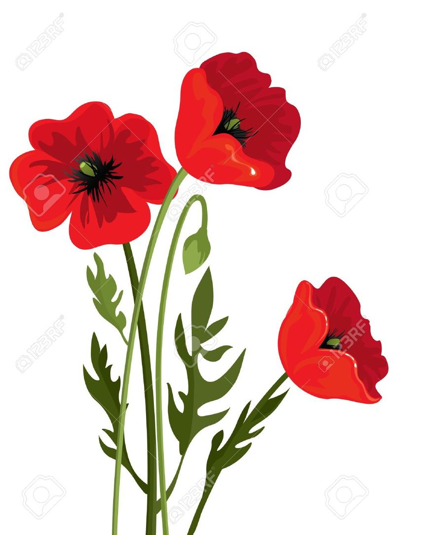 Download Poppy Flower Transparent Background Clipart Common Poppy