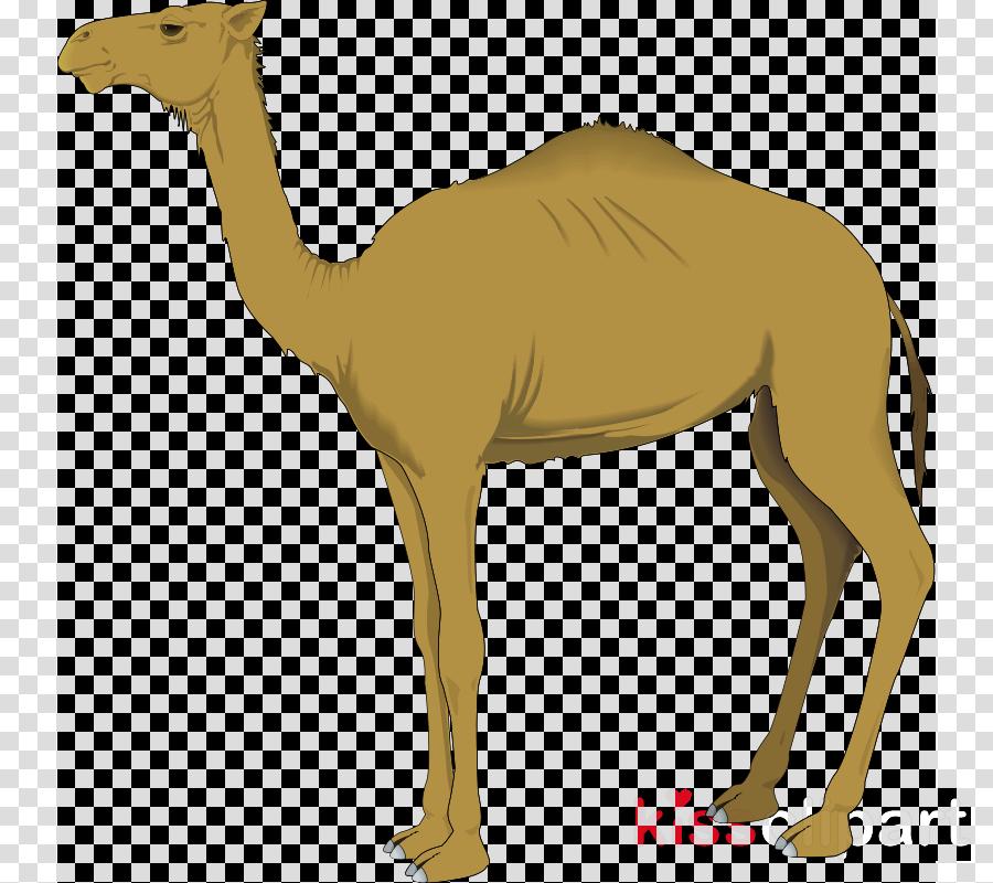 camel clip art clipart Dromedary Clip art