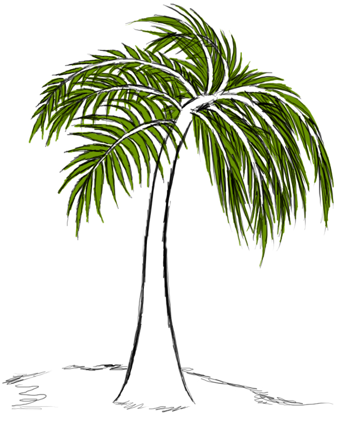 how to draw a palm tree trunk