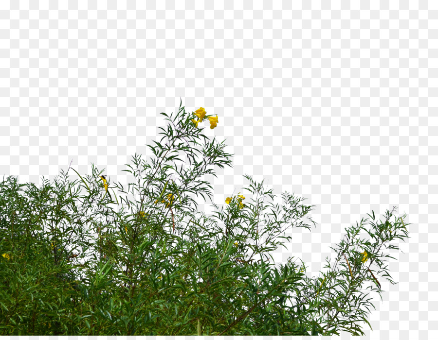Bushes Png