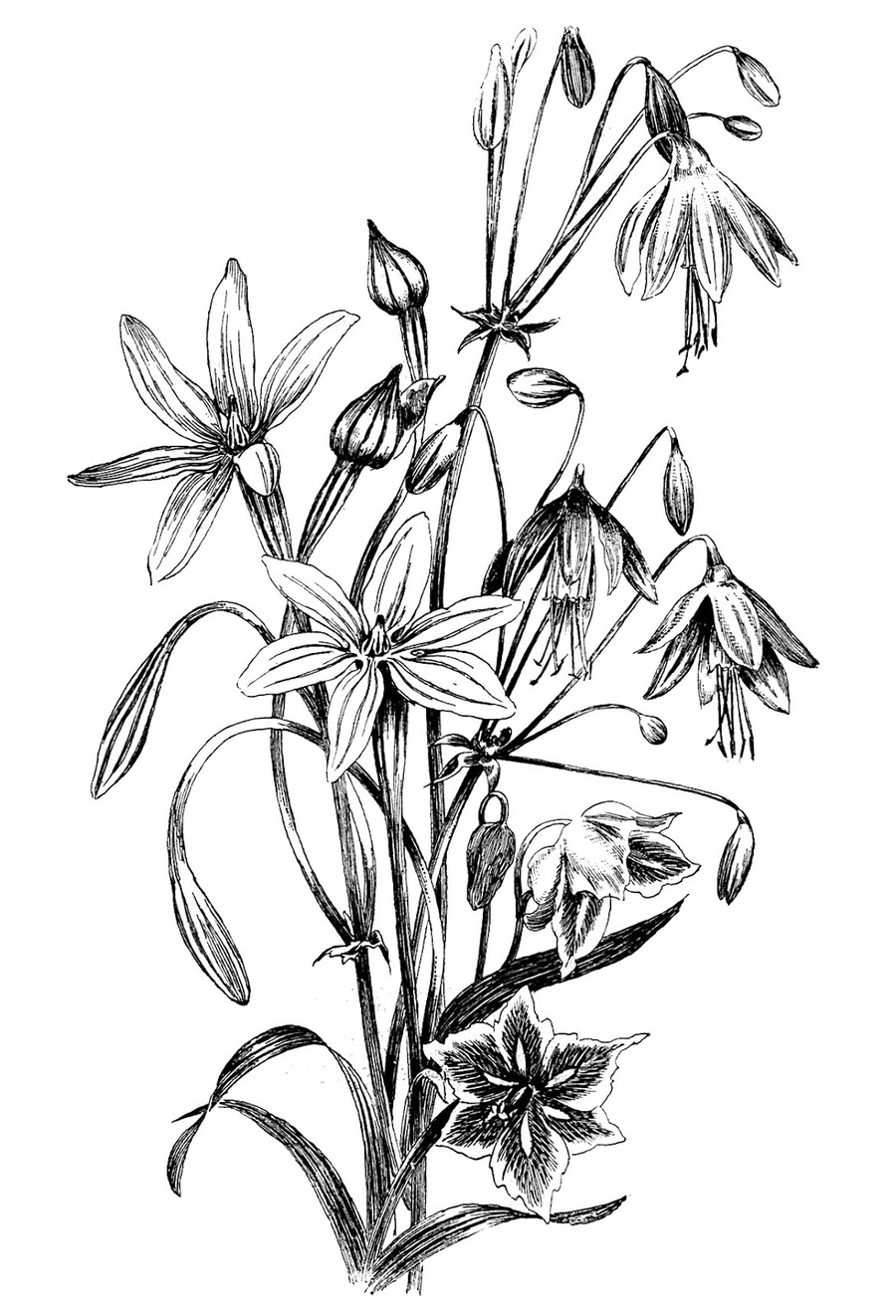 Download Drawing Flowers In Black And White Clipart Flower Drawings