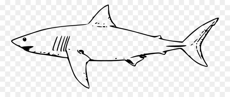 Great White Shark Background