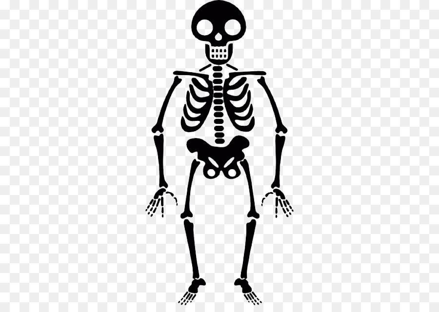 Skelet Voor Halloween.Halloween White Background Clipart Halloween Skull Human