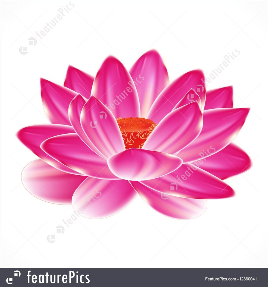 Download Water Lily Tattoo Designs Clipart Water Lily Sacred Lotus