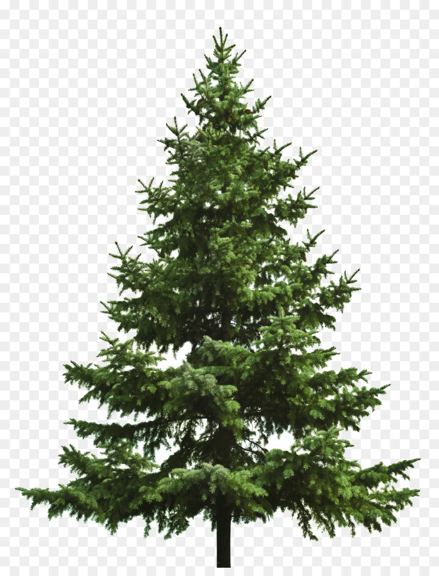 Bare Christmas Tree Clipart.Christmas Tree Branch Clipart Tree Pine Transparent Clip Art
