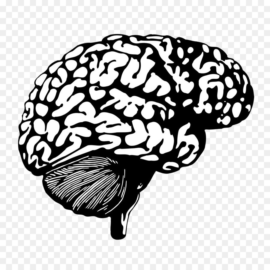 Human brain clipart Human brain Neuroimaging