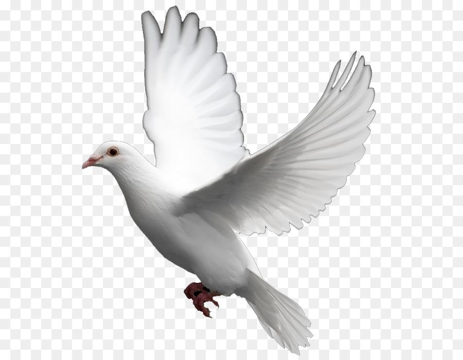 Dove Bird Clipart Bird Feather Wing Transparent Clip Art