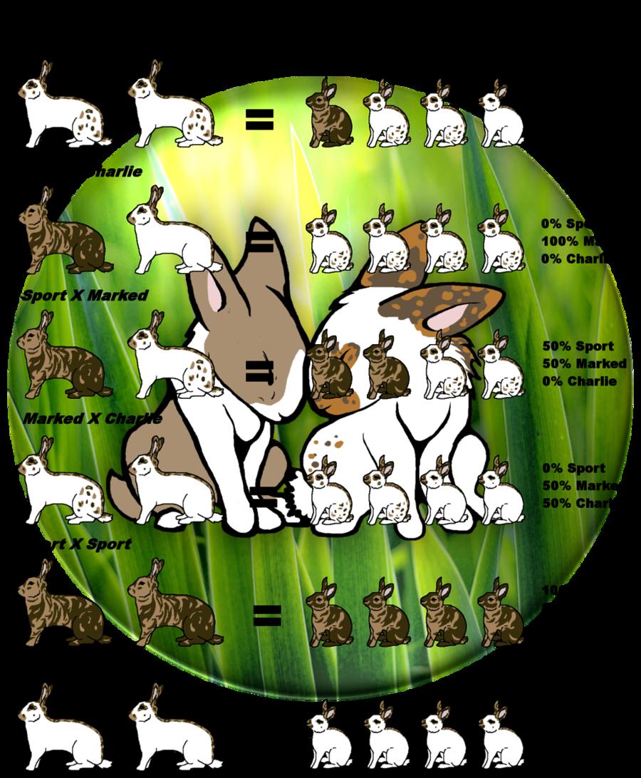rabbit genetics chart clipart Holland Lop Lionhead rabbit Miniature Lop