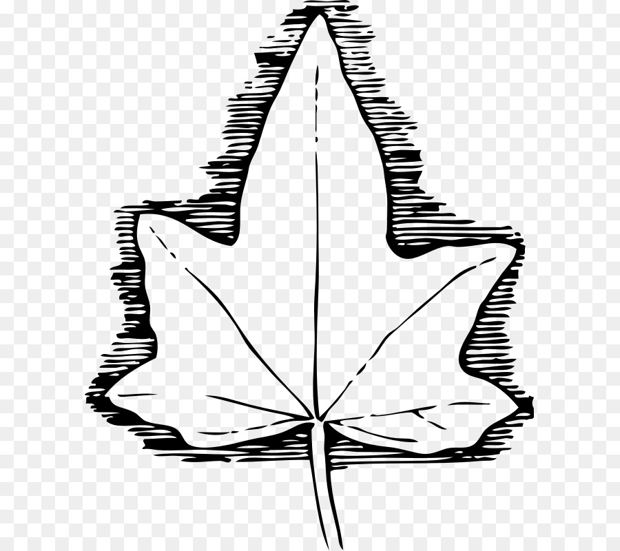 Download Ivy Leaf Template Clipart Common Vine Clip Art Drawing