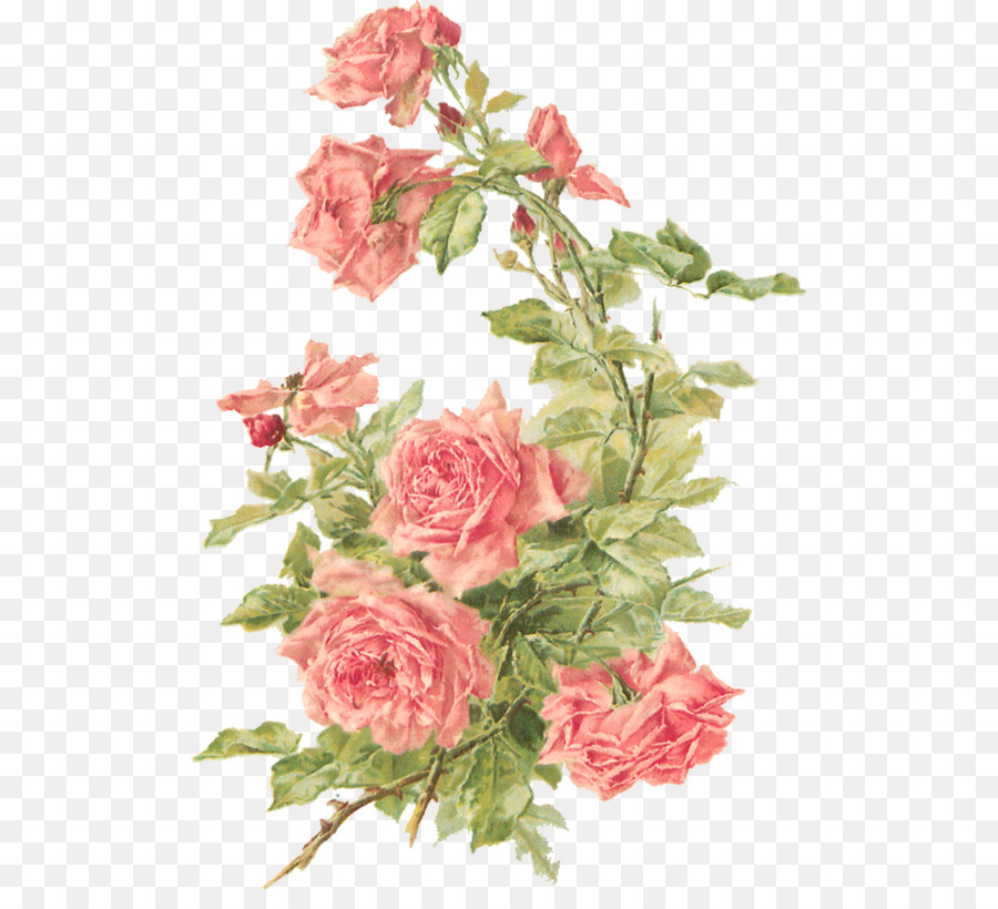 Flower Rose Graphics Transparent Png Image Clipart Free Download