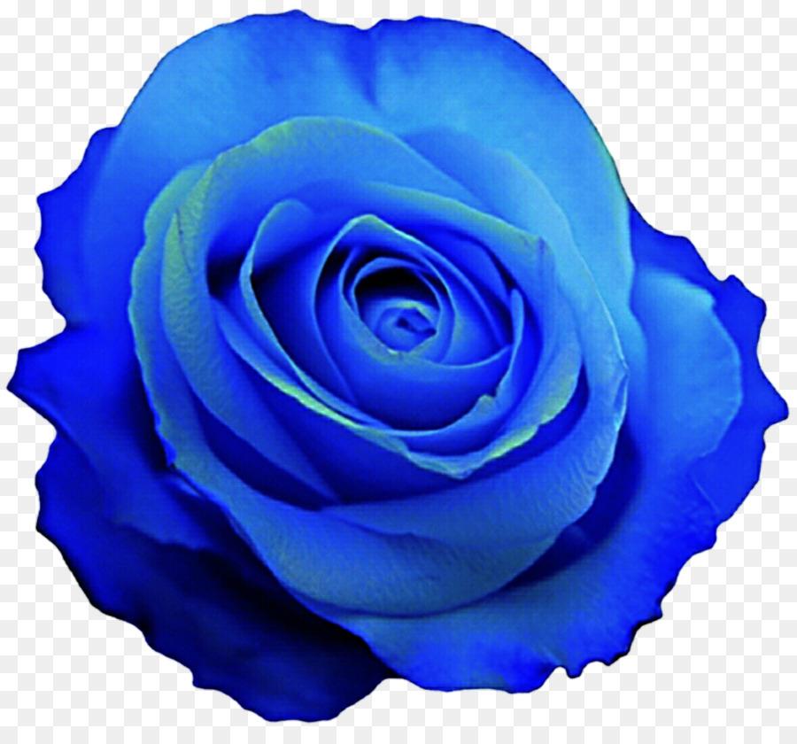 Rose Flower Blue Transparent Png Image Clipart Free Download