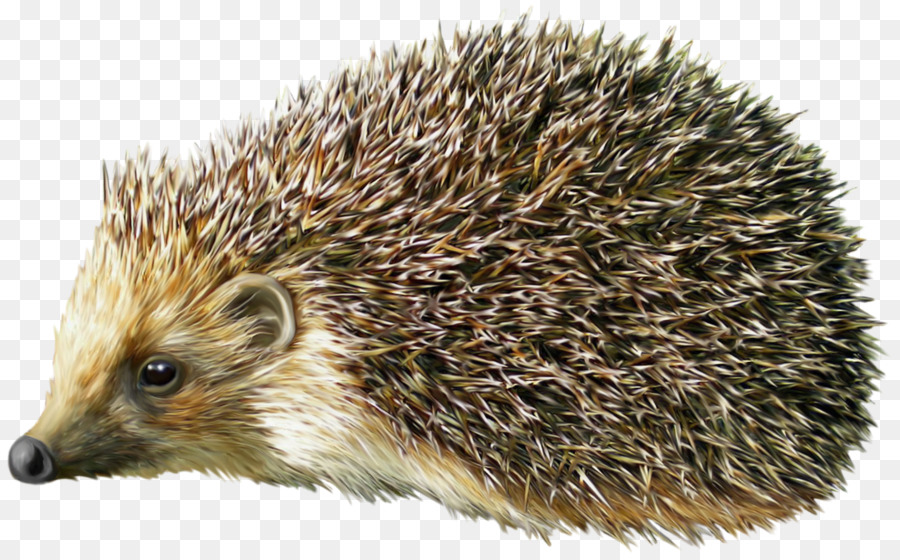 png hedgehog clipart Hedgehog Clip art
