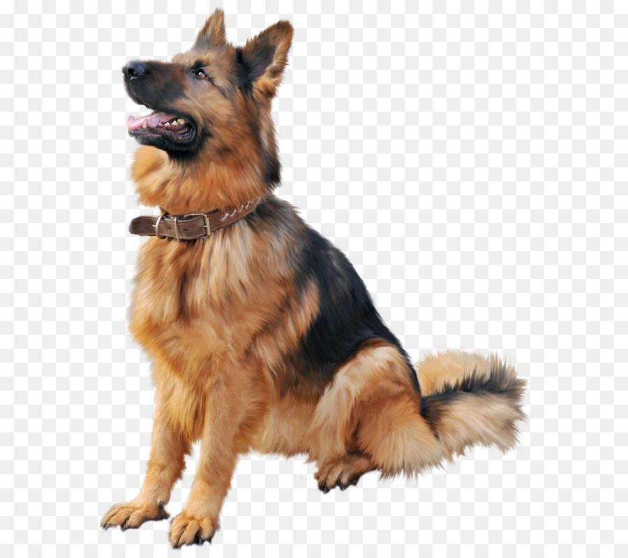 german shepherd dog png clipart Old German Shepherd Dog Shiloh Shepherd dog