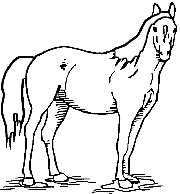 Drawing Sketch Horse Transparent Image Clipart Free Download