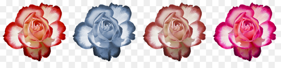 petal clipart Close-up Font