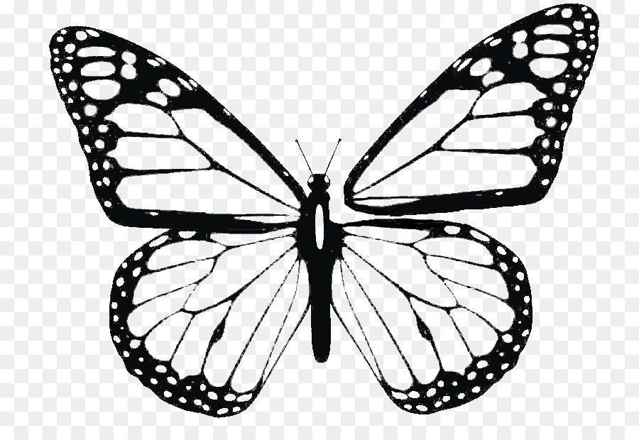 Butterfly Wing Line Transparent Image Clipart Free Download