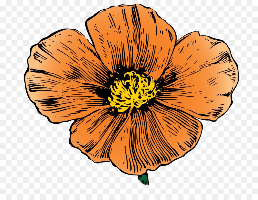 California drawing. Of family clipart poppy