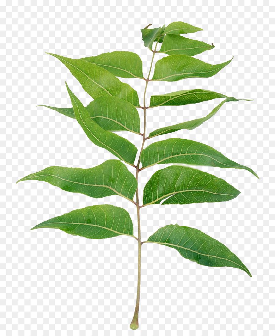 Plant Leaf Tree Transparent Png Image Clipart Free Download