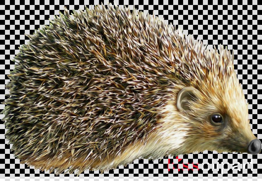 hedgehog png clipart Hedgehog Clip art