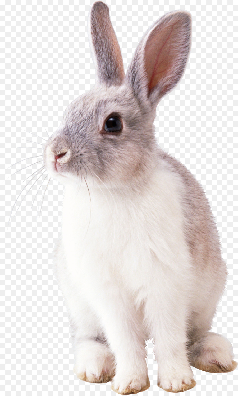 rabbit transparent clipart Hare Easter Bunny Rabbit