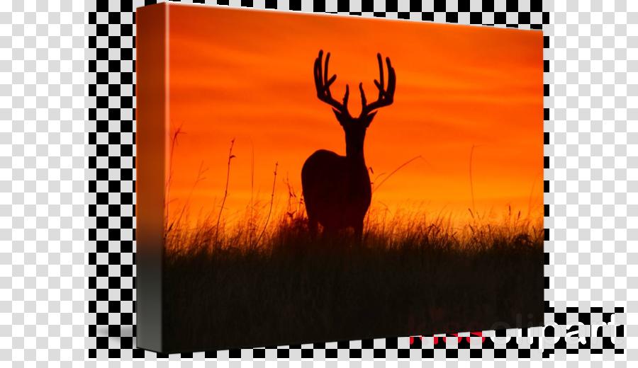 deer clipart White-tailed deer Antler