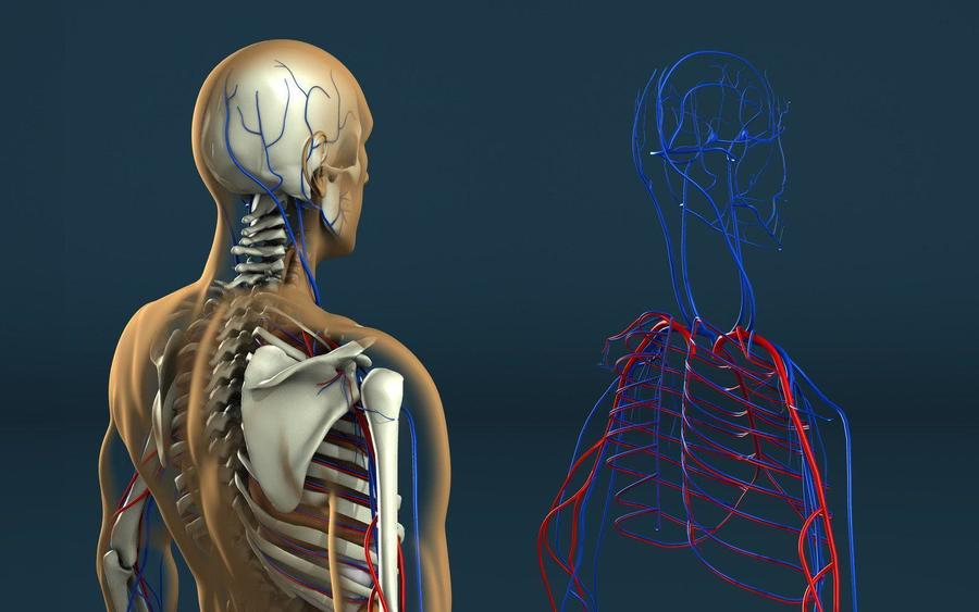 Download Human Anatomy And Physiology With Health Education