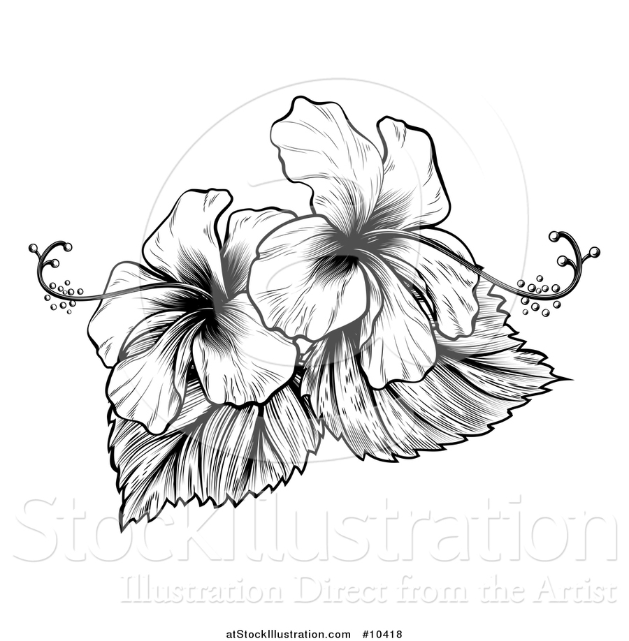 Download Black And White Hibiscus Flowers Clipart Flower Clip Art